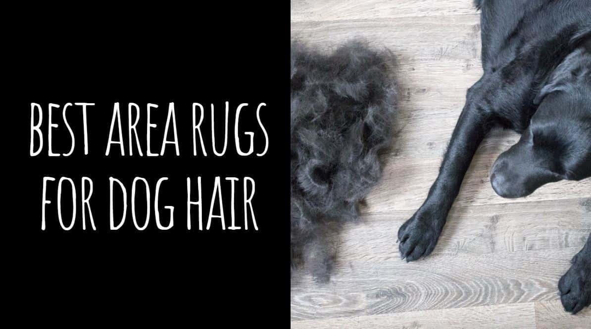 Best Area Rugs for Dog Hair