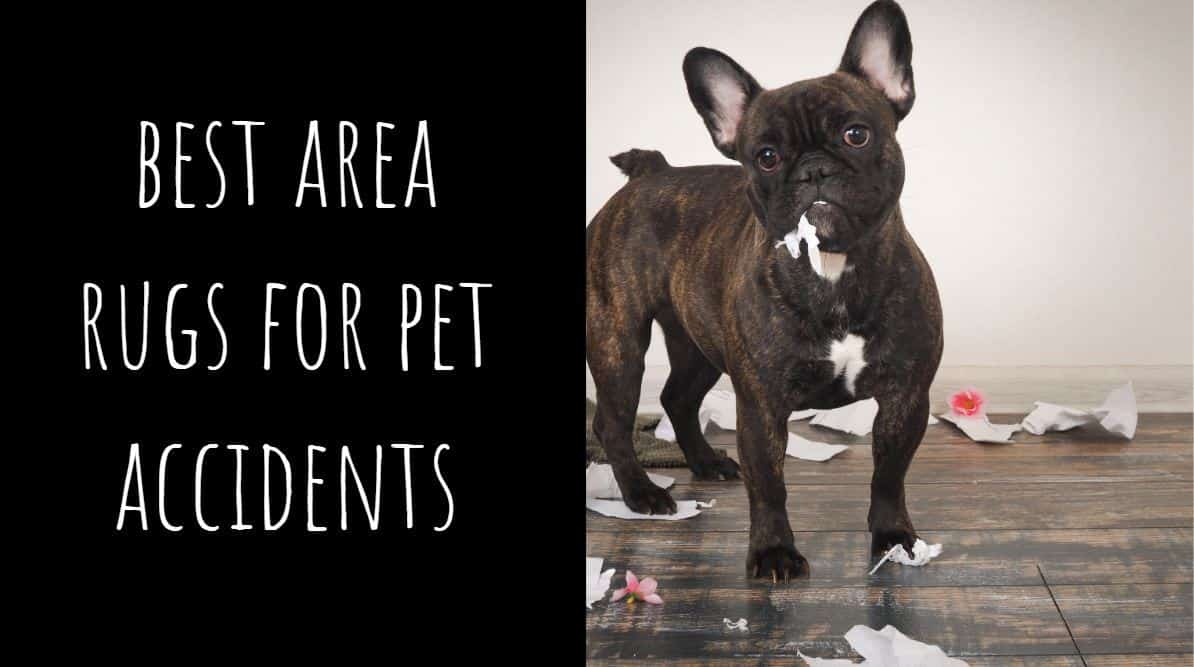 Best Area Rugs for Pet Accidents